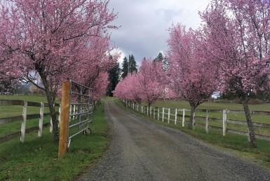 Nanaimos Beautiful Landscape