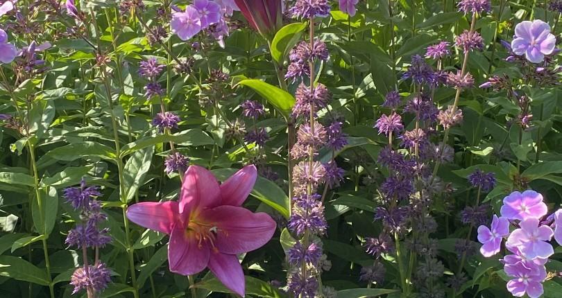 June Blog 2021 – Gardening on Vancouver Island